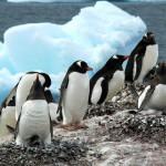 antarktis2007_001