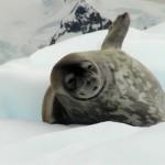 antarktis2007_021