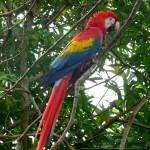 costarica2008_028